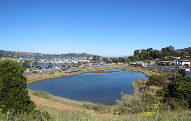 Transforming an Urban Wetland in Marin City