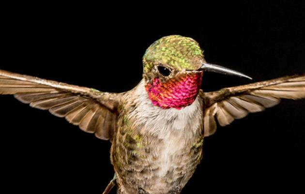 Audubon Bird Guide App, Now Free