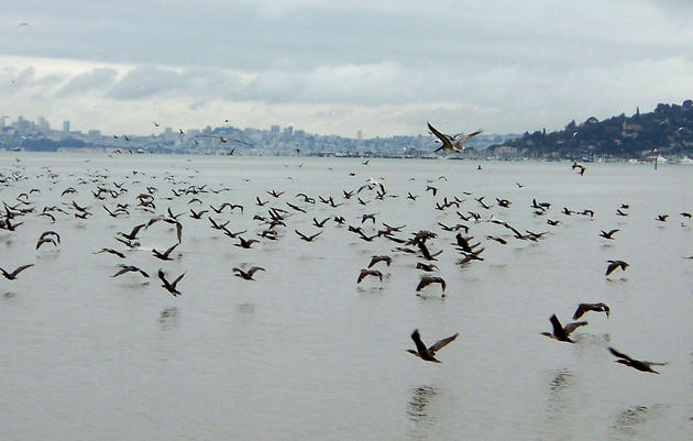 Counting Waterbirds