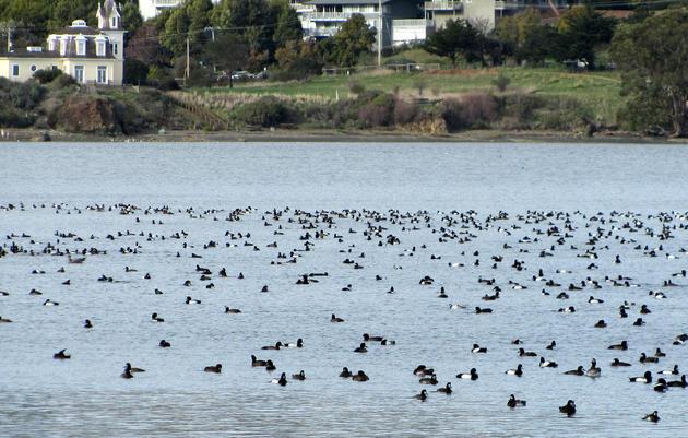 Waterbird Survey Results