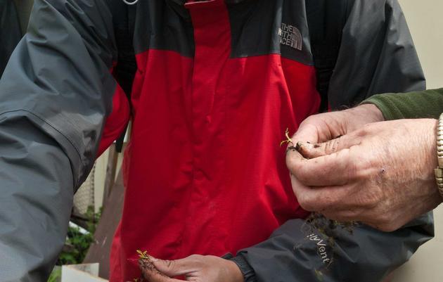 Volunteer at Richardson Bay Audubon Center & Sanctuary