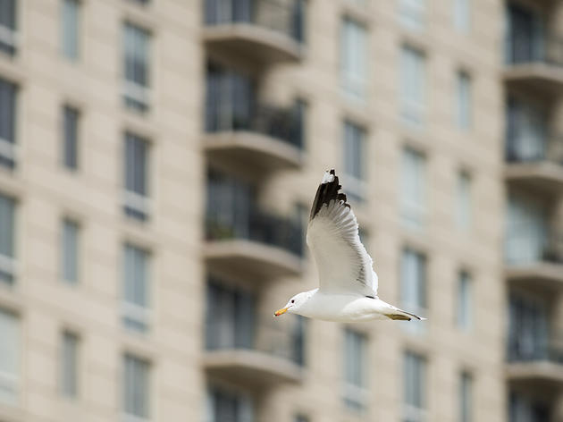 Emeryville Planning Commission Votes to Protect Birds in New Building Standards