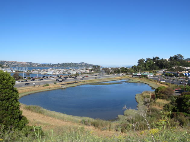 Transforming an Urban Wetland in Marin City