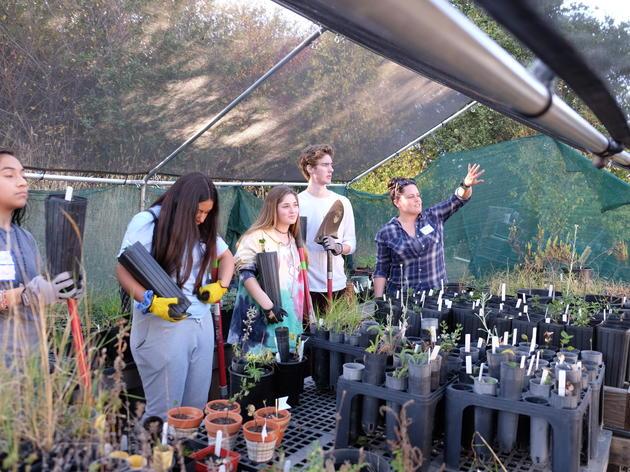 Native Plant Nursery Volunteer Opportunities