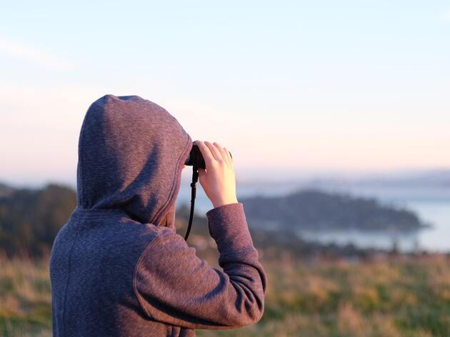 AuduBlog: The Glories of Bird Watching
