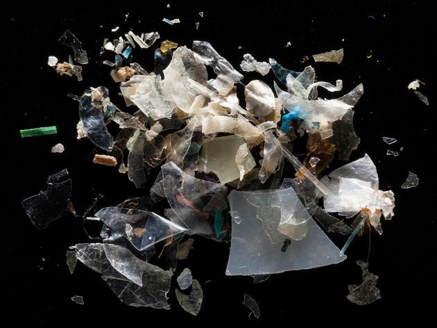 Effects of Plastic Ingestion on Marine Birds