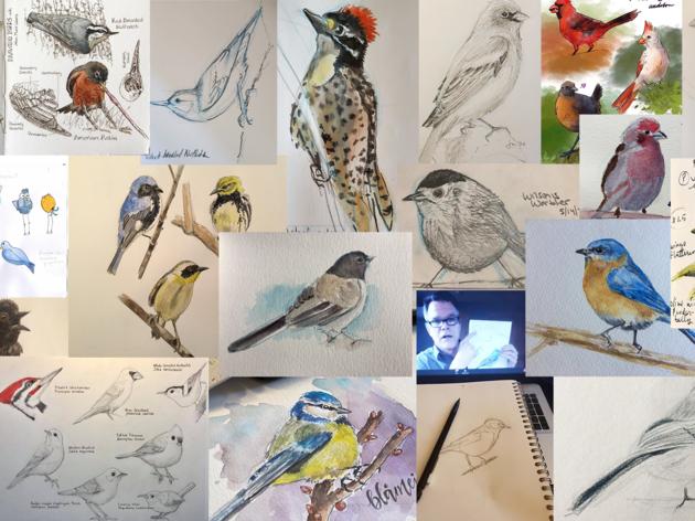 Audubon California Digital Content Production