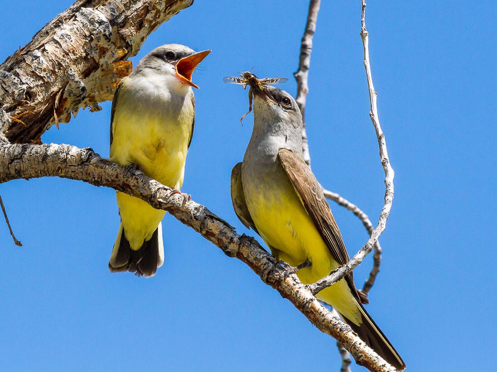 Photo: Mike Daniels / Audubon Photography Awards